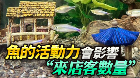 魚的活動力會影響來店客的數量!---張定瑋老師