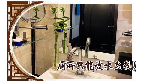廁所只能放水盆栽!