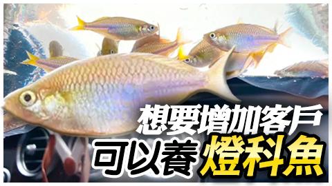 想要增加客戶可以養燈科魚哦---張定瑋老師