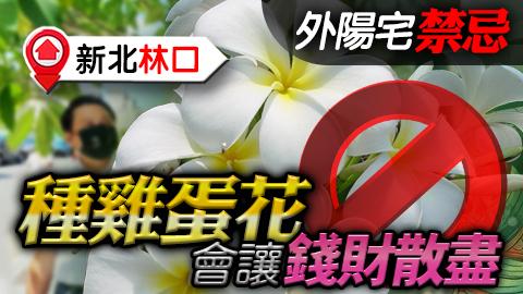 新北林口-外陽宅的禁忌種雞蛋花會讓錢財散盡---張定瑋老師風水勘嶼