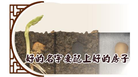 好的名字配上好的種子才會發芽茁壯