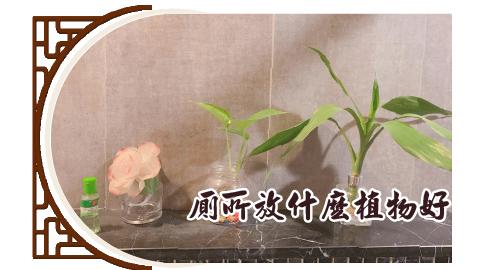 廁所放什麼種類的植物比較好呢?
